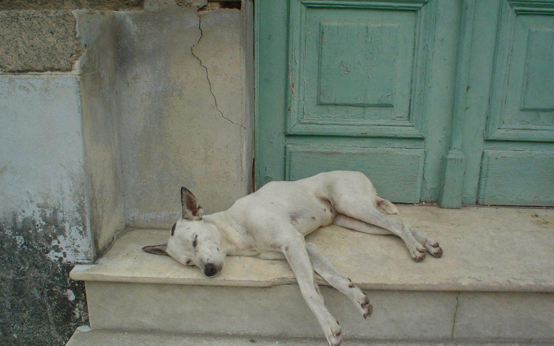 3 huomioitavaa asiaa harkitessasi rescue-koiran ottamista