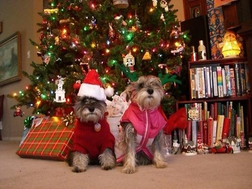 Joulukoristeet koiraperheelle