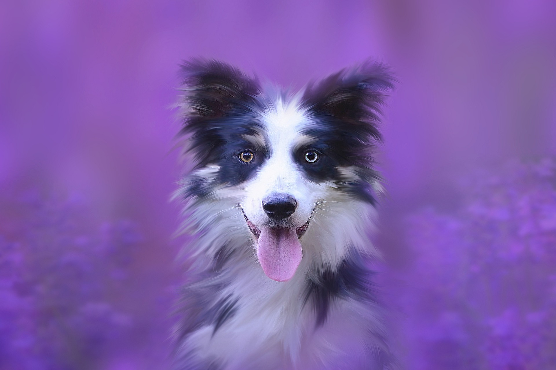 Colliesta mieleen Lassie-elokuvat